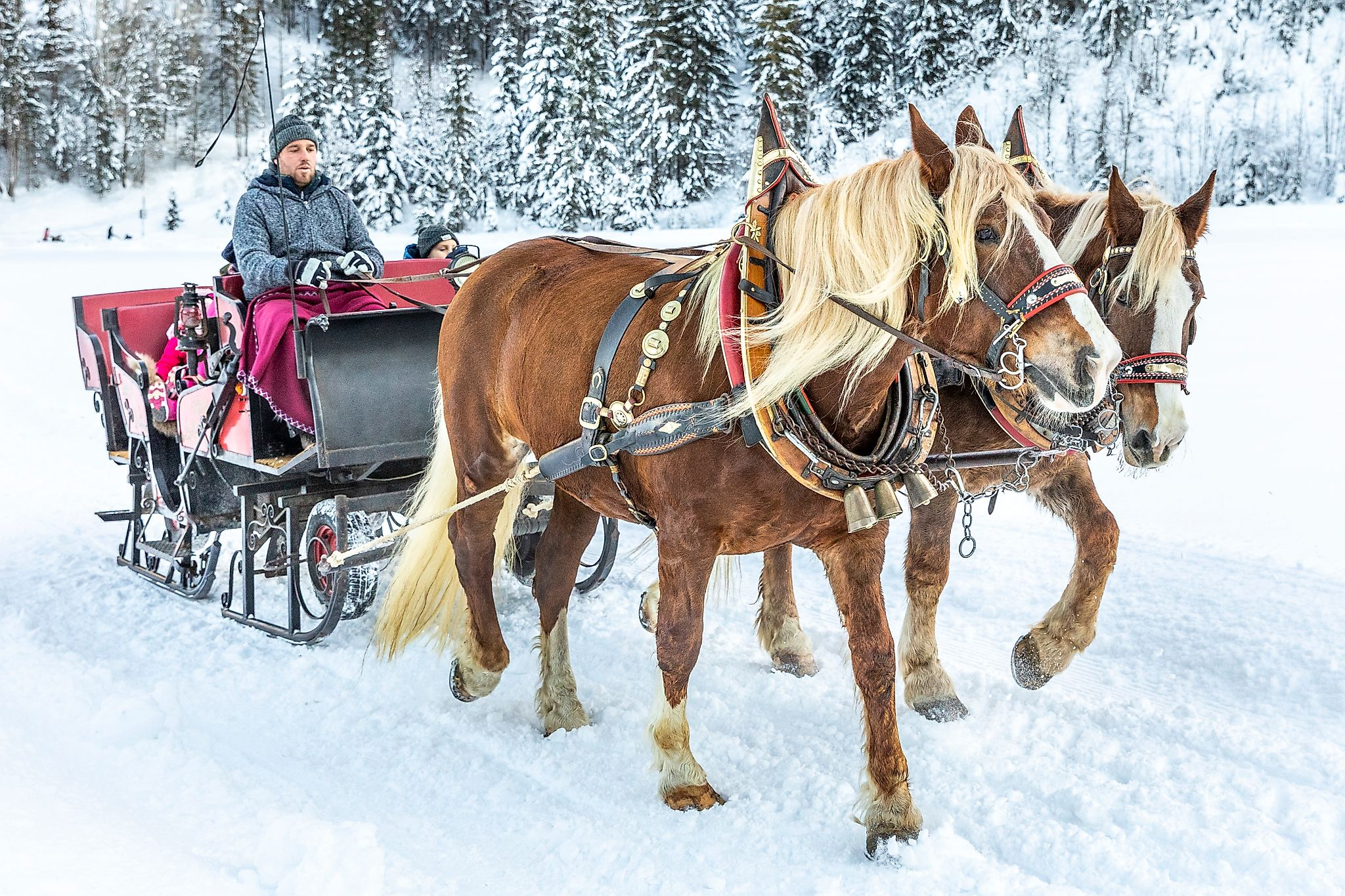 <p>Experience the wintry Flachautal by horse-drawn sleigh ride.</p>
