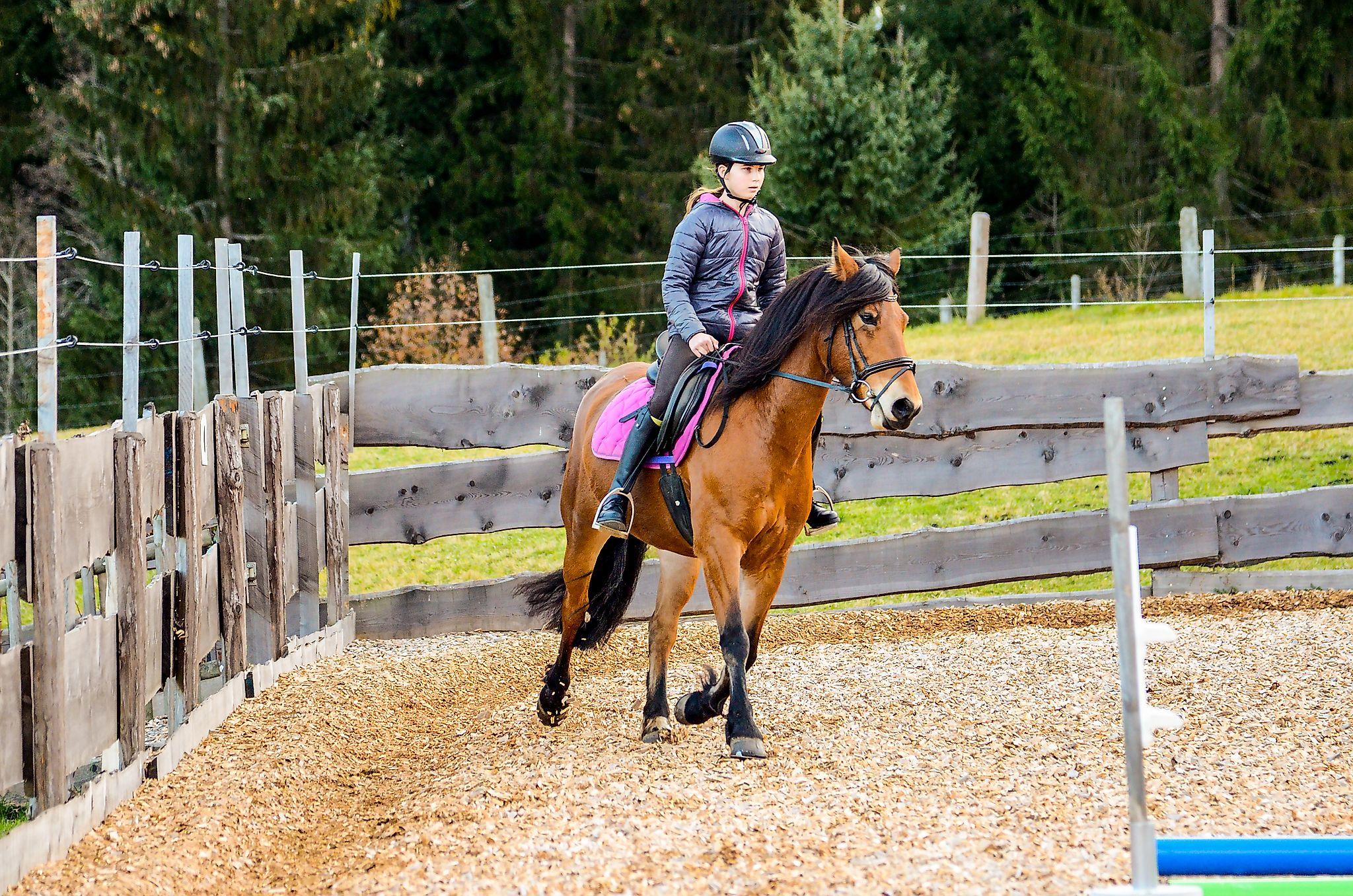 <p>Das Glück dieser Erde liegt auf dem Rücken der Pferde, denn Reiten ist etwas ganz Besonderes</p>